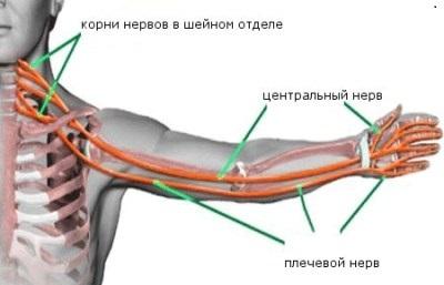 244255nemeyut-paltsy-ruk